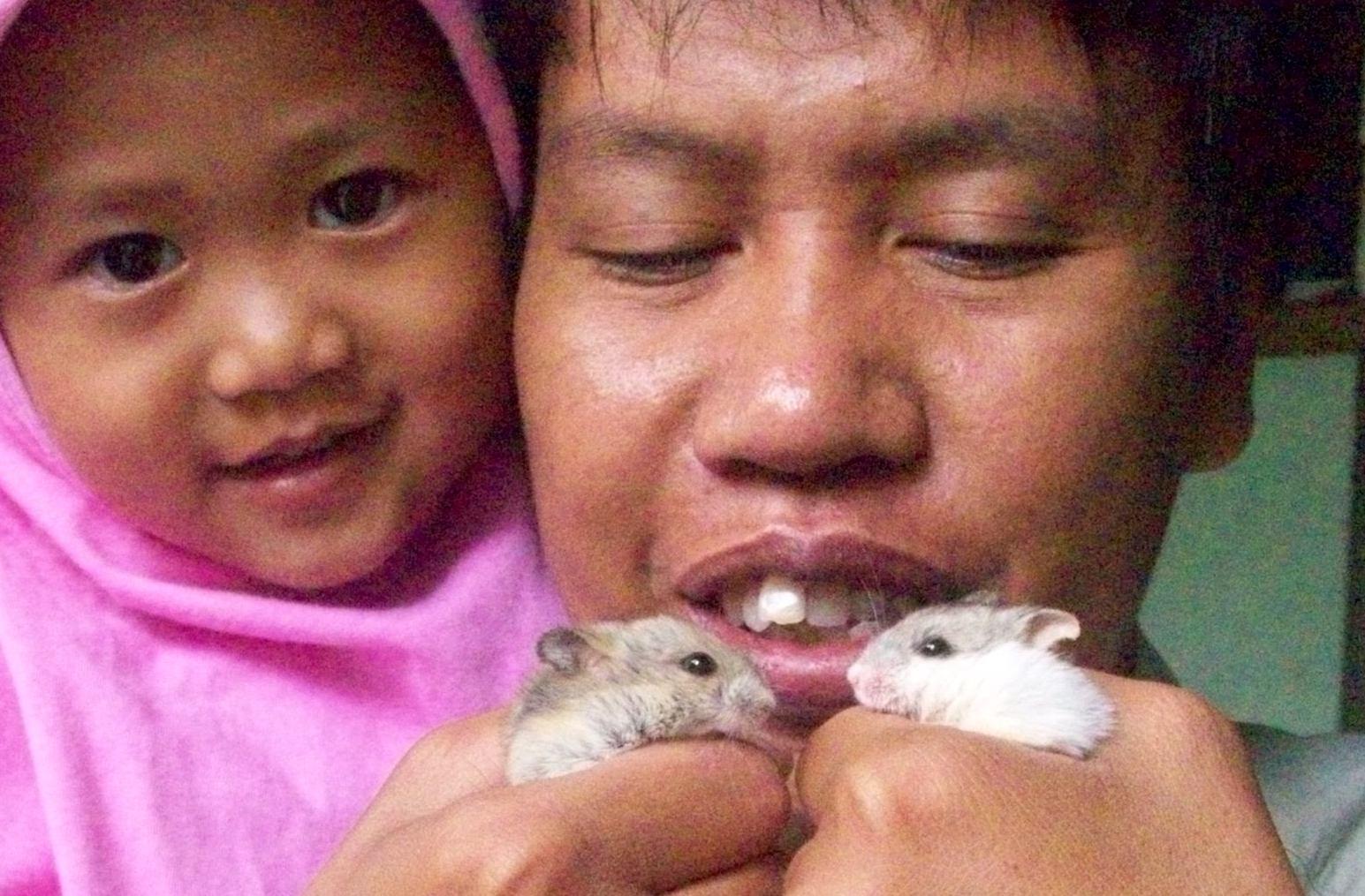 Hamster Mini Yang Lucu Berbagi Tak Pernah Rugi