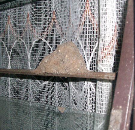 sarang lebah yang di jendela. foto ini diambil sendiri oleh royan.