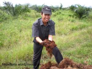 kompos tandan kosong kelapa sawit