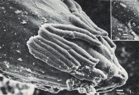 rhizosphere0001a