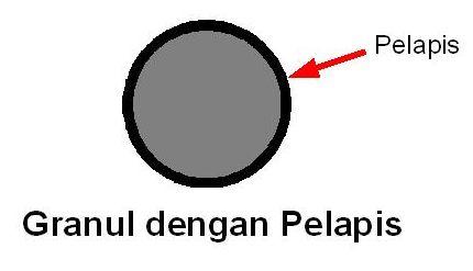 granul_pelapis