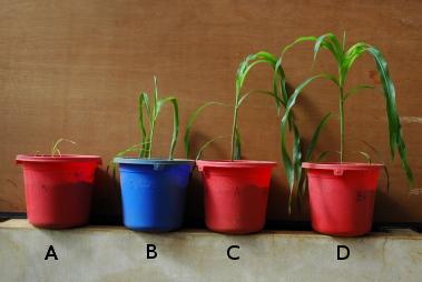 aplikasi mikroba pada tanaman