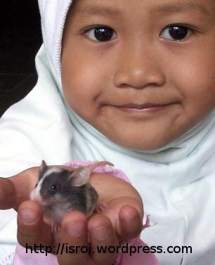 Tikus Klangenan