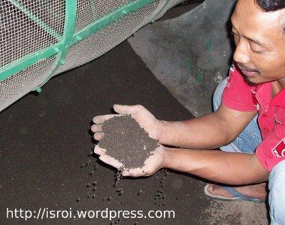 pupuk organik granul
