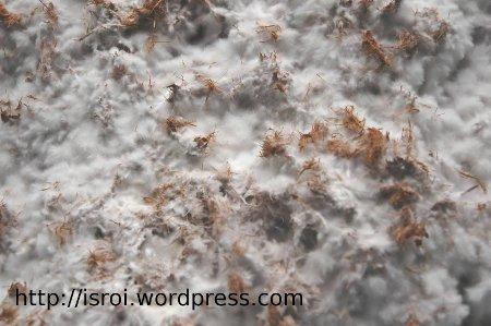 Jamur Pelapuk Putih