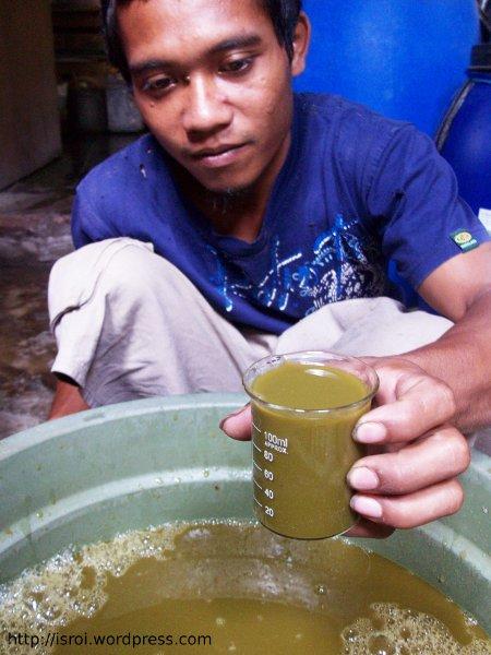 ekstrak suren pestisida nabati
