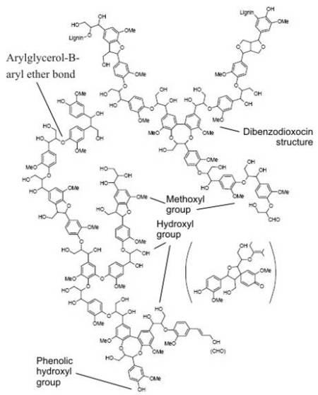 lignin struktur brunow