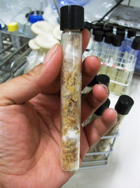 jamur di dalam tabung