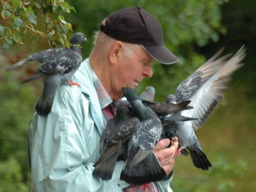 Old mand and The Pigeons