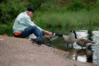 Kakek tua sedang memberi makan burung