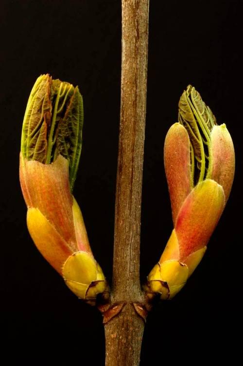 fotografer tanaman