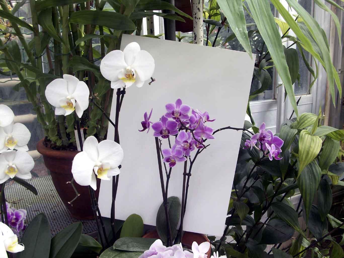 Tips Memotret Bunga Dengan Kamera Saku Berbagi Tak Pernah Rugi