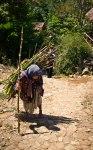 Nenek Pencari Kayu