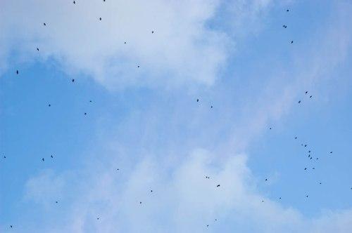 burung-burung di langit