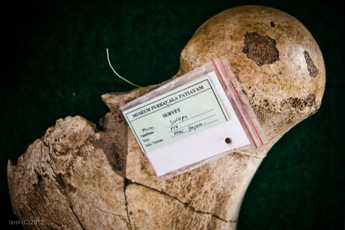 Fosil tulang gajah purba