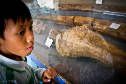 Fosil gajah purba