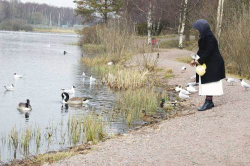 Memberi makan bebek, angsa, merpati, dan burung camar di tepian danau Svartemossa. Hari kamis pagi. Sorenya umminya sudah harus masuk ke rumah bersalin.