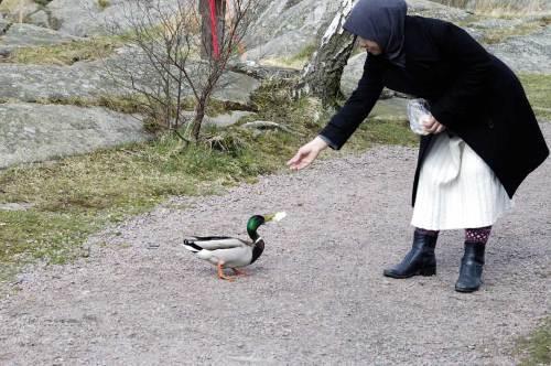 Memberi makan bebek di tepian danau Svartemosse. Pagi hasi sebelum sorenya masuk kamar bersalin.