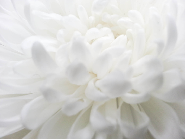 Unduh 95+ Background Alam Putih Gratis