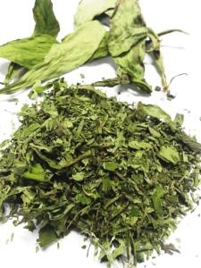daun stevia pemanis alami