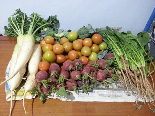 sayuran segar sehat gratis