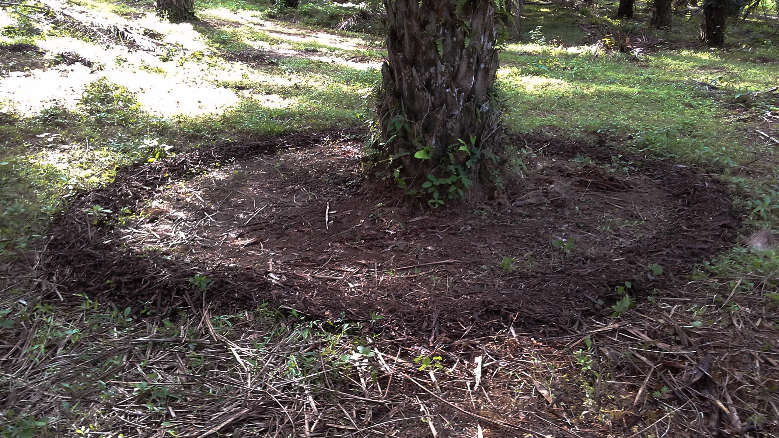Pembuatan Kompos Sisa Pangkasan Pelepah Sawit Dengan Promi Berbagi Pupuk Organik