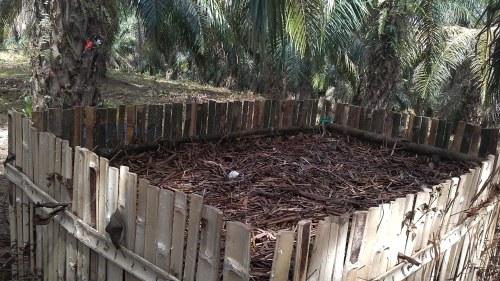 kompos pelepah sawit dengan Promi