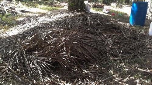 kompos pelepah sawit promi