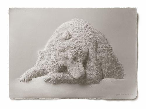 calvin nicholls paper sculpture