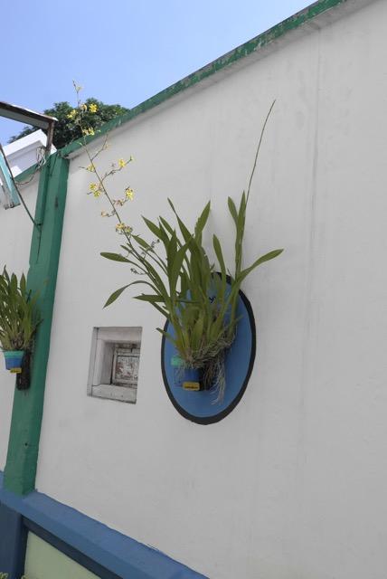 Anggrek di tempel di dinding-dinding jalan.  Jambon Gesikan Magelang .