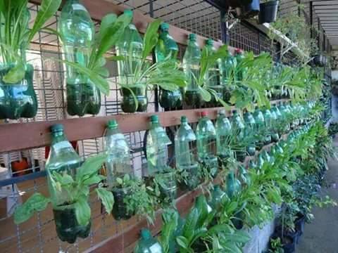 pot dari botol plastik bekas