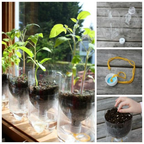 DIY-Self-Watering-Seed-Starter-Pots-from-Plastic-Bottles