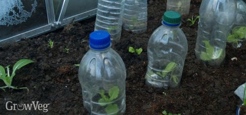 plastic-bottle-cloches3-2x