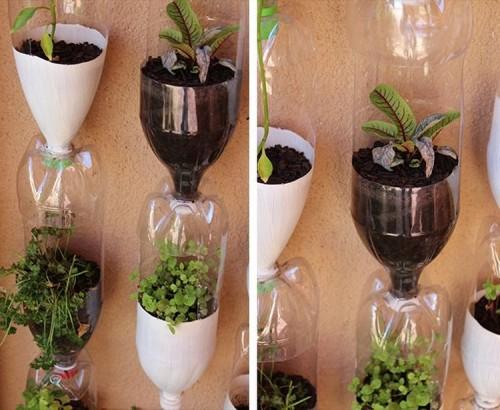 vertikal garden dari botol bekas