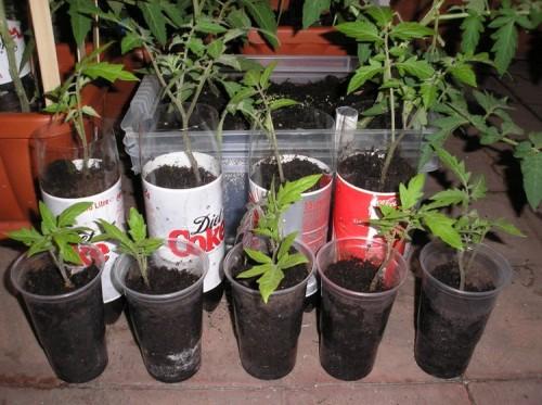 Recycled-Plastic-Bottle-Gardening