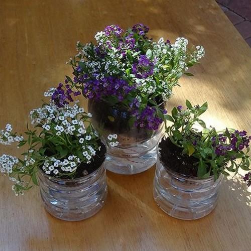 Recycled-Plastic-Juice-Bottles-Gardening
