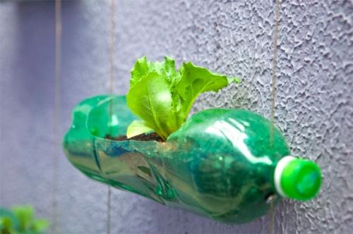 soda-bottle-wall-garden-2