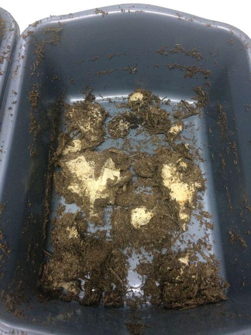 bioplastik pengujian disintegrasi