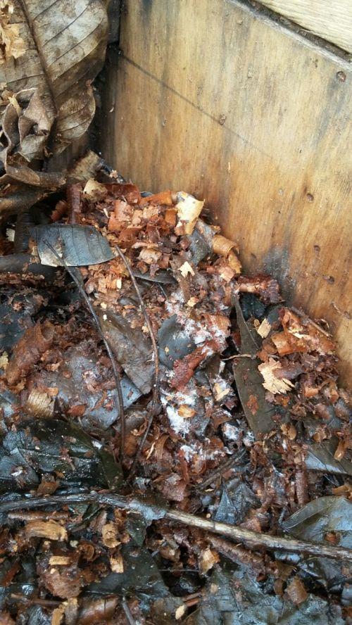 pengomposan serutan kayu