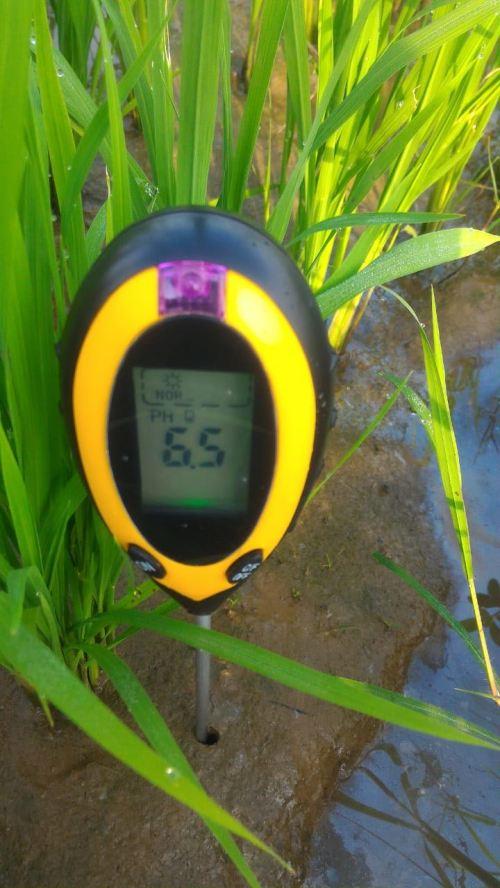 pH tanah setelah aplikasi asam humat dan kaptan